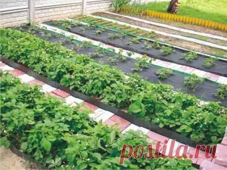 Хитрости огородников | Огород без хлопот