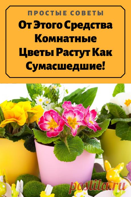 От Этого Средства Комнатные Цветы Растут Как Сумасшедшие! — Простые советы