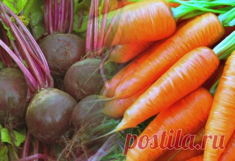 Храню урожай свеклы и моркови с осени до весны, все как свежее | Пенсионерка из глубинки | Яндекс Дзен
