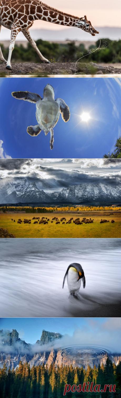 14 самых потрясающих фотографий природы, сделанных в 2013-м году - Мир Путешествий