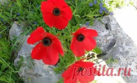 15 однолетников с красными цветками – яркие краски в вашем саду - Цветочки - медиаплатформа МирТесен