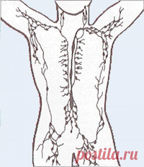 Лимфатическая система — Википедия