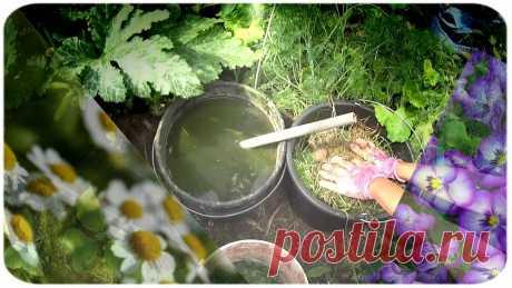 Как мы делаем удобрения для подкормки цветов и растений. | АЗБУКА ЦВЕТОВ | Яндекс Дзен