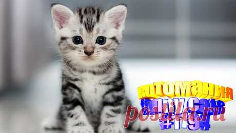 Любите смотреть смешные видео про котов? Тогда мы уверены, Вам понравится наше видео 😍. Также на котомании Вас ждут: видео кот,видео кота,видео коте,видео котов,видео кошек,видео кошка,видео кошки,видео о котах, видео про, видео смешных кошек, говорящие коты видео, коты 2020, кошек смешные, о кошках, приколы котов, про котика, про кошку, смешно котики, смешные видео про животных, смешные котята