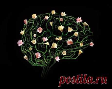 """""""Мы - это наш мозг"""". А наш мозг - это... только мы? — ПСИ-фактор.Взгляд. — Профессионалы.ru"""