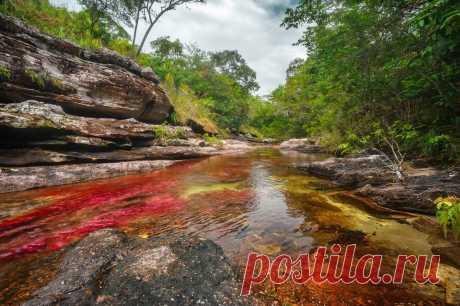 Каньо-Кристалес - фантастическая река в Колумбии - Путешествуем вместе