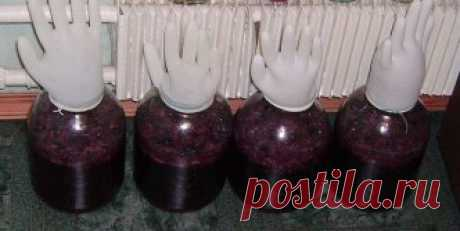 КАК приготовить вкусное домашнее ВИНО? Ингредиенты для вина из винограда: виноград – 10 кг; сахар-песок – 2,5-3 кг. Рецепт вина из винограда в домашних условиях: 1. Берем немытые (это очень важно, иначе брожения не произойдет) виноградные грозди и тщательно обираем с них ягоды. 2. В эмалированном ведре давим руками или толкушкой небольшими порциями виноград до сильного появления сока. 3. Затем прикрываем емкость марлей и оставляем для брожения в тепле примерно на 4-5 дней....