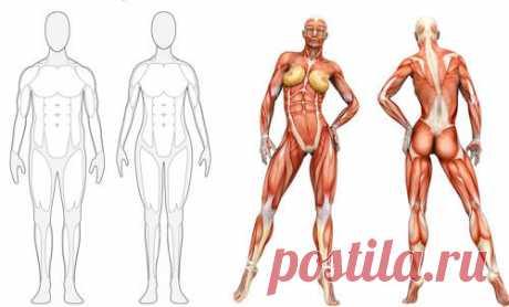 5 продуктов, наращивающих мышцы, которые нужно есть после тренировки! - Полезные советы красоты