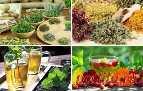 ПОЛЬЗА ОТ ТРАВЯНЫХ ЧАЕВ  ЧАБРЕЦ Рекомендован при гриппе, при спазмах желудка, заболеваниях почек, как мочегонное, при анемии, бессоннице, мигренях, ревматических болях. Также пьют как «мужской» чай. РОМАШКА Сердечный чай. Выраженное антитромбическое воздействием и антимикробное действие (при гриппе, простудах, воспалениях). ШИПОВНИК Кладезь антиоксидантов, флавоноидов, витаминов (С, К) и минералов, укрепляющий иммунную систему. Если вам хочется выпить красного вина, но нел...