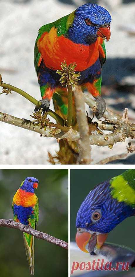 ����� ������������ ������������ ����� (12 �����) экзотические виды птиц