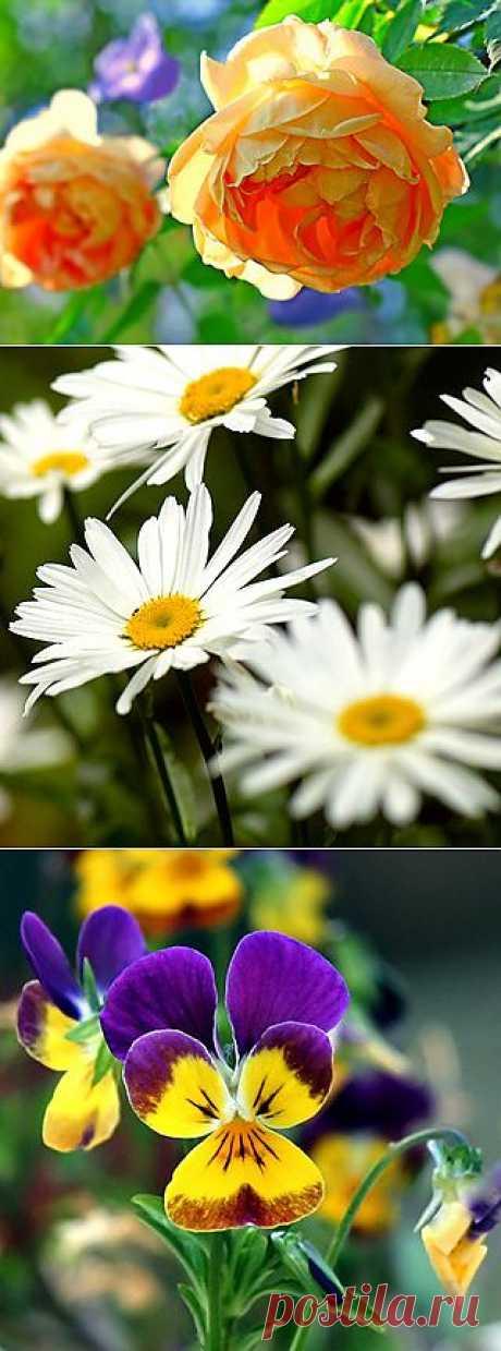 Ностальгический сад. Как правильно подобрать смесь цветущих растений, имитирующих деревенский сад.