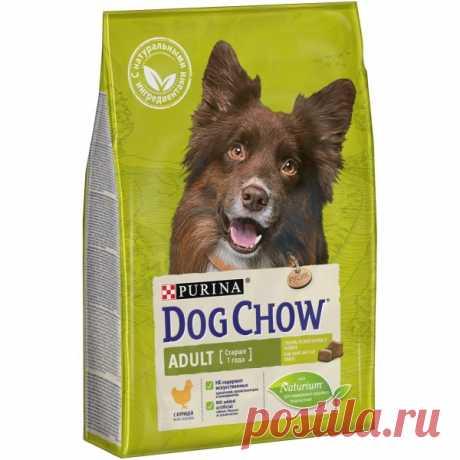 5 трюков, которые заставят всех восхищаться вашей собакой - Питомцы Mail.ru