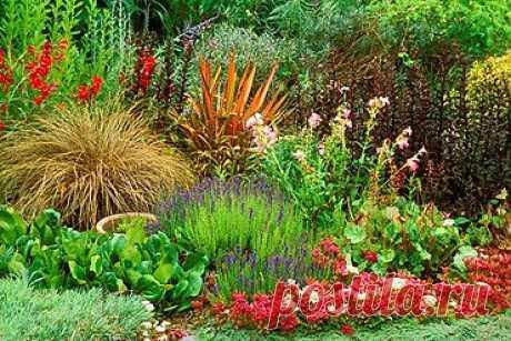Многолетники в саду | Любимые цветы