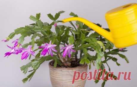 Помогаем комнатным растениям пережить зиму – 5 важных моментов, о которых вы могли забыть