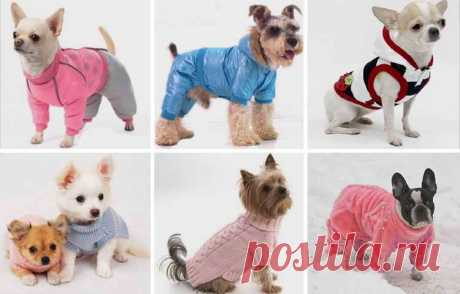 Как сшить одежду для собак своими руками