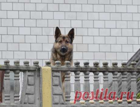 #на_заборе  #собаки