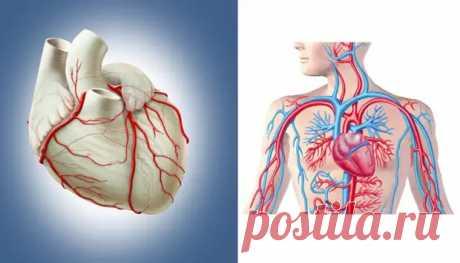 Самые важные витамины и минералы для здоровья сердечно-сосудистой системы - медиаплатформа МирТесен