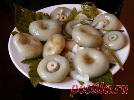 Milk mushrooms: we salt and pickle. How to salt milk mushrooms?