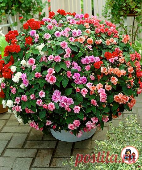 Больше нет желания выращивать петунию. Нашла 3 вида цветов, которые выглядят ничуть не хуже, но при этом менее прихотливы | Цветущий сад | Яндекс Дзен