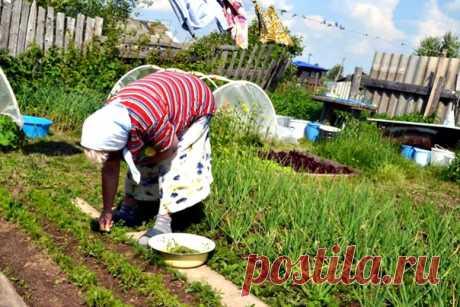 Маленькие хитрости опытного садовода  1. Йод для капусты В ведро воды добавить 40 капель йода. Когда начнет формироваться кочан, поливать капусту под растение по 1 литру.  2. Ускорение пророста Чтобы семена быстрее проросли их замачивают в растворе перекиси водорода (4%) на 12 часов (капуста), а семена помидоров и свеклы - на 24 часа. Для обеззараживания семян (вместо марганцовки) их обрабатывают 10% перекисью водорода 20 минут. Соотношение раствора и семян 1:1. Затем семе...