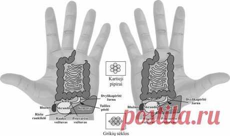 Norėdami pagerinti skrandžio veiklą, kuo dažniau abiejų delnų skrandžio taškus trinkite kitos rankos nykščiu iki kaitrios šilumos – HolistineMedicina.lt