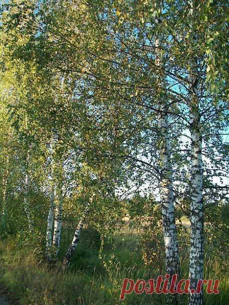 Фото@Mail.Ru: Зоя Воронова : Все краски осени: фото