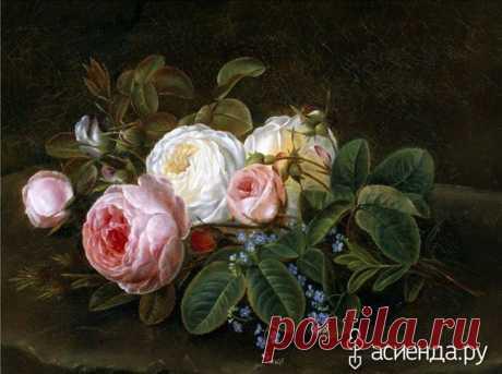 Старинные розы. Сорта. часть 2.: Группа Цветы и флористика