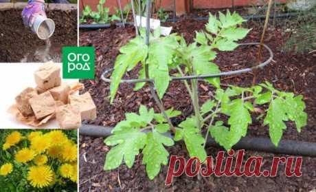 Народные средства для подкормки помидоров – самые лучшие рецепты | Томаты (Огород.ru)