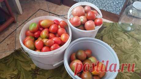 Посадил и забыл. Топ простых и урожайных томатов для выращивания | Люблю свою дачу | Яндекс Дзен