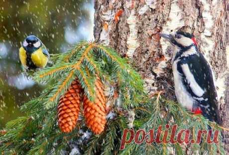 Птицы зимой. Красота! Класс!!