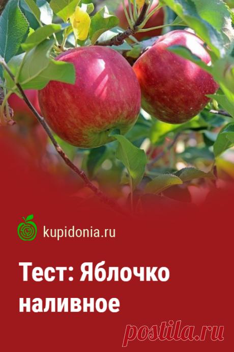 Тест: Яблочко наливное. Тест о яблоках, состоящий из 10 интересных вопросов разной сложности. Проверьте свои знания!