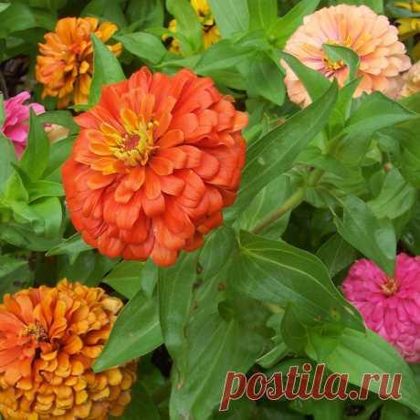 Садовые однолетники, клумба из однолетников | Любимые цветы