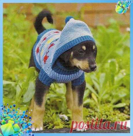 Кофта с капюшоном для собачки (Вязание спицами)   Журнал Вдохновение Рукодельницы