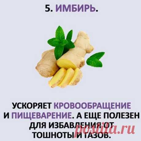 ТОП- 5 противопаразитных растений