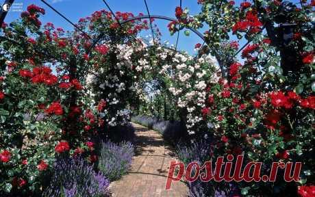 Сад Королевского Национального Общества Розоводов - Путешествуем вместе