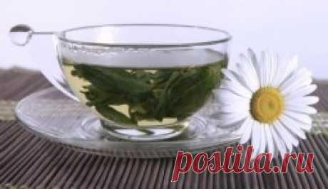 Травы для похудения — Dietoflife.ru