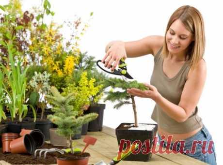 8 золотых правил по уходу за комнатными растениями Для того чтобы выращивать комнатные растения, вовсе не нужна «легкая рука». Важно соблюдать простые правила по уходу за всеми цветами в доме. Их вы сможете узнать, прочитав нашу статью.    Правильный …