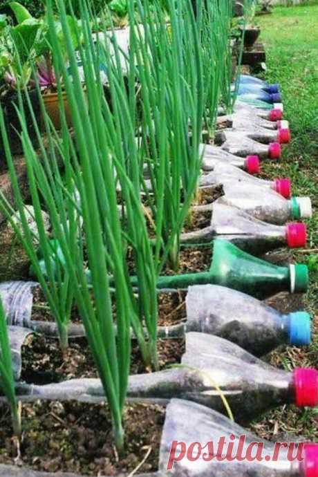Пластиковые бутылки на даче                                   Это ещё не лебеди из покрышек, но уже смекалка работает на красоту        Солнечный водонагреватель Душ с теплой водой бесплатно!                          Универсальн…