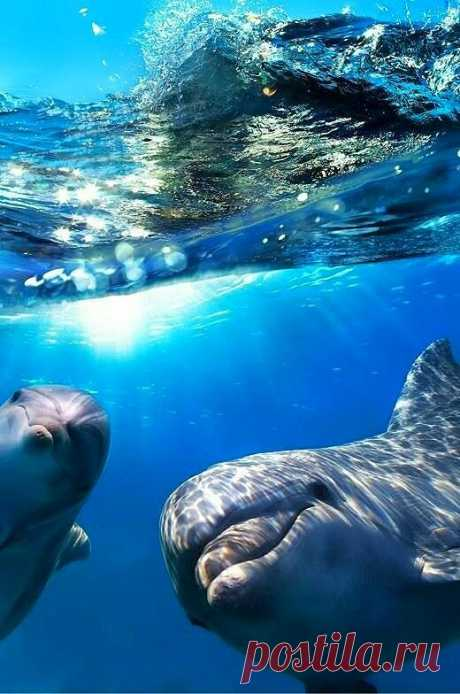 23 Июля - всемирный день дельфинов и китов  23 июля в мире отмечается Всемирный день китов. Этот праздник был учрежден в 1986 году, когда Международная китобойная комиссия, после 200 лет беспощадного истребления, ввела запрет на китовый промысел.  Однако, сегодняшний день считается днем защиты не только китов и дельфинов, но и всех морских млекопитающих. Ежегодно в этот день различные природоохранные группы проводят акции в защиту морских млекопитающих. Часто экологи объед...