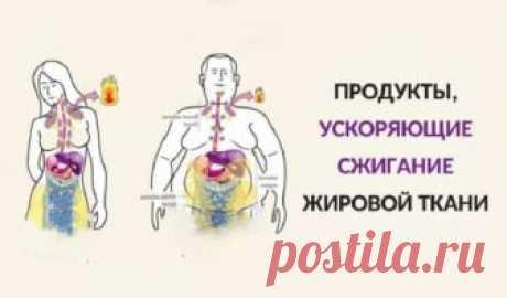 Продукты, ускоряющие сжигание жировой ткани Продукты, ускоряющие сжигание жировой ткани. Интересно, как должна выглядеть диета, чтобы как можно скорее избавиться от лишних килограммов на животе. Продукты, ускоряющие сжигание жировой ткани.Интересно,как должна выглядеть диета,чтобы как можно скорее избавиться от лишних килограммов