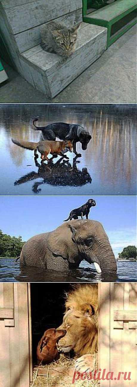 (+1) тема - Трогательные фото дружбы между такими разными животными | ЛЮБИМЫЕ ФОТО