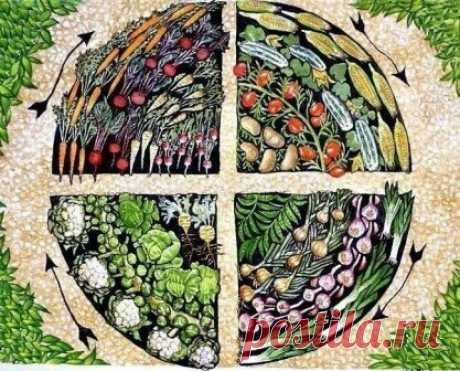 Пять верных способов предотвратить истощение почвы на участке | 6 соток