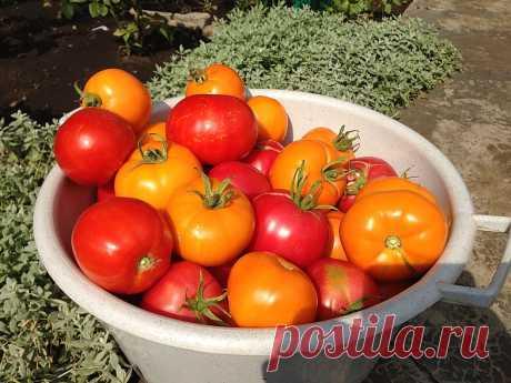 Универсальная подкормка для созревания помидоров! — Садоводка
