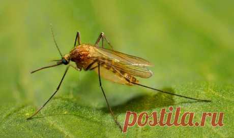 Как я спасаю своих детей от последствий комариных укусов. Прекращают чесаться моментально.