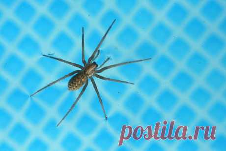 Spider  Free Stock Photo HD - Public Domain Pictures