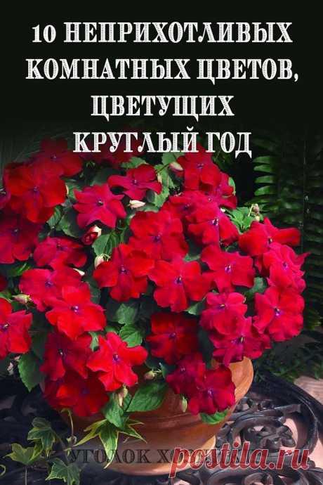 Правильно подобрав цветы можно создать цветущий островок у себя на подоконнике на круглый год. Долгоцветущие неприхотливые растения дарят радость, хорошее настроение и приносят пользу, очищая воздух.
