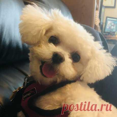 Собаки, дарящие улыбку