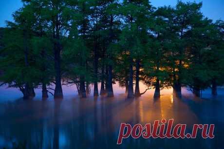 Утро в роще болотных кипарисов, Краснодарский край. Автор фото — Егор Никифоров: nat-geo.ru/photo/user/35895/