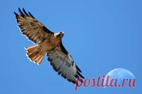 10 самых смертельно опасных птиц для человека птиц.