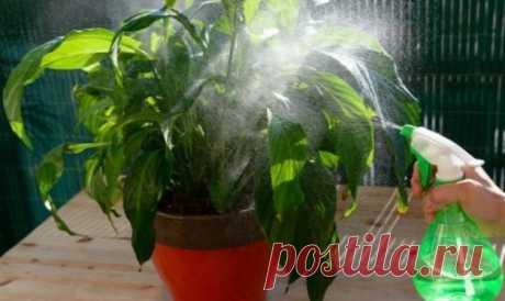 Вот как побороть тлю на комнатных растениях: народные стредства — Копилочка полезных советов